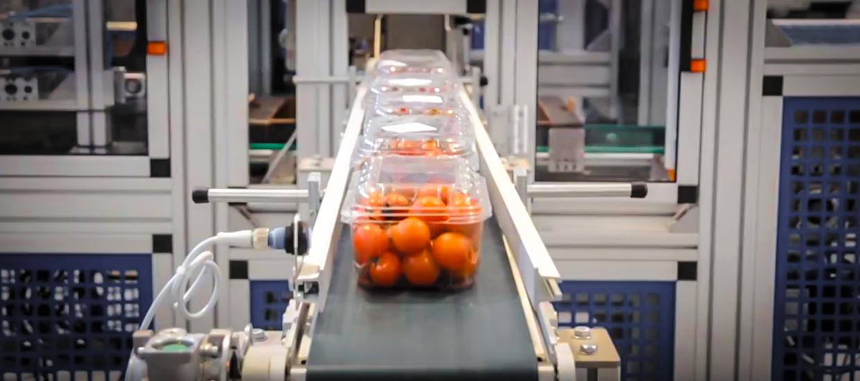 cestini con pomodori su nastro trasportatore